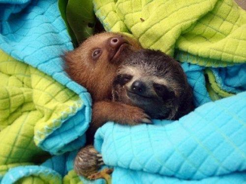 Hedgehog and Sloth were best friends...